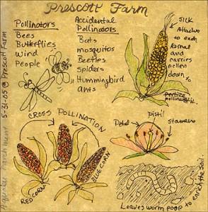 Prescott Farm Sketch Page