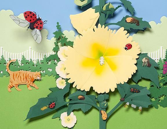 Lifecycle of a Ladybug © Denise Ortakales