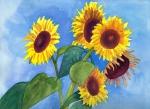 Sunflowers © Denise Ortakales