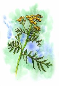 Yellow Flowers © Denise Ortakales