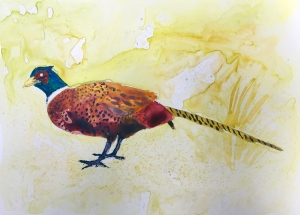 Pheasant, Watercolor on Yupo paper